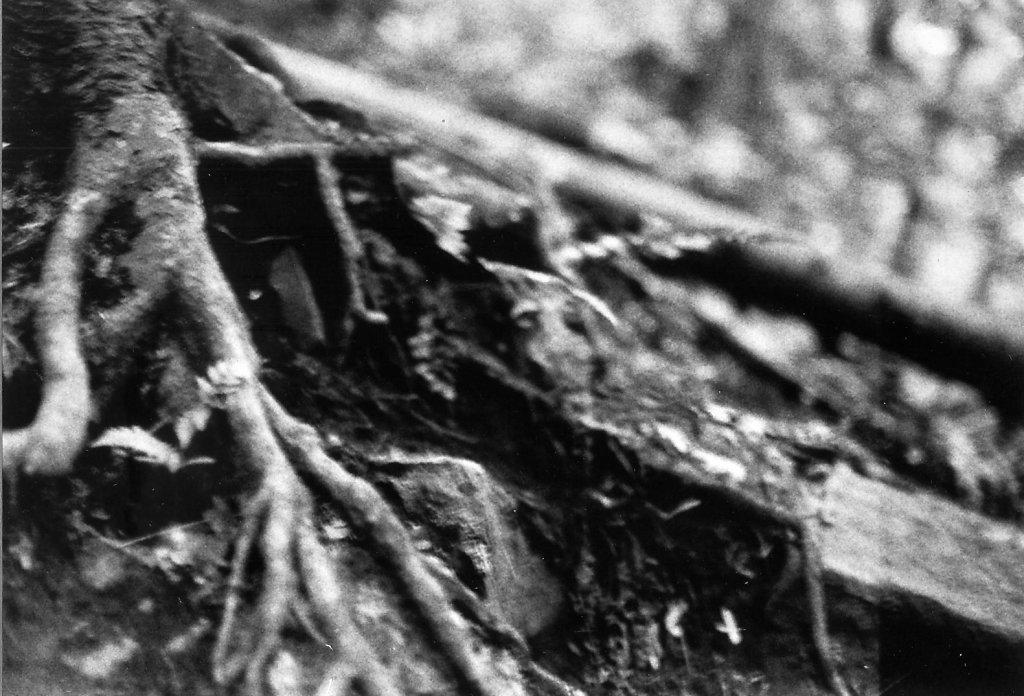 série branches, feuilles, etc ...